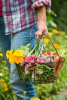 Woman carrying a trug of harvested Carrots, Radishes, Beetroot, Tomatoes, Calendula and Spring Onions