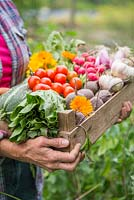 Woman holding a wooden crate of produce from an allotment. Tomatoes, Radishes, Beetroot, Garlic, Spring Onions, Calendula, Lettuce and Courgette