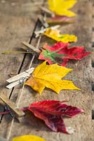 Variety of autumnal leaves hung on to string by pegs, against a wooden backdrop.