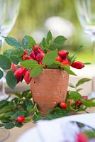 Rosa - Rose hips used as a table place setting