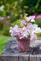 Cut garden flower arrangement - pink and white sweetpeas and alchemilla mollis in painted clay pot