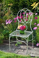Cut garden flower arrangement - pink cosmos and fennel flowers on antique garden seat