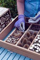 Woman creating homemade insect boxes using dried flower heads and stems