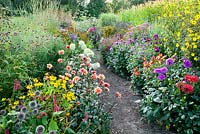 Pathway through colourful summer borders filled with flowers