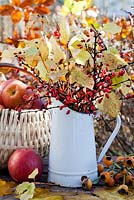 Autumn displays with jug and basket of apples on a table - dogwood Cornus sanguinea 'Midwinter Fire', rose hips, Berberis thunbergii atropurpurea.