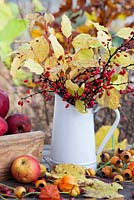 Autumn displays with jug and trug of apples on a table - dogwood Cornus sanguinea 'Midwinter Fire', rose hips, Berberis thunbergii atropurpurea.