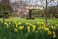 Highgrove in Spring, April 2013. Daffodils and blossom near the House and Thyme Walk.