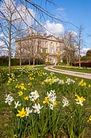 Highgrove House and the front drive lined with lime trees and daffodils, April 2013. The house was built between 1796 and 1798 in a Georgian neo classical design.