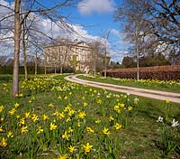 Highgrove House and the front drive lined with lime trees and daffodils, April 2013