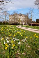 Highgrove House and the front drive lined with lime trees, and daffodils,  April 2013. The house was built between 1796 and 1798 in a Georgian neo classical design.