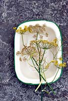 Picked seed heads of dill in vintage enamel dish - saving seeds
