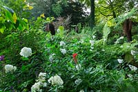 Panicle Hydrangeas and tree ferns in the Winterbourne Garden, Highgrove, September 2013