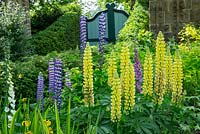 Lupins in the Buttress Garden, Highgrove, June 2013.