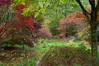 Japanese acers in the Arboretum, Highgrove Garden, October 2013