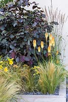 Border planting of Corylus maxima 'Purpurea', Kniphofia and Stipa tenuissima. Garden: Hedgehog Street.