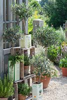 Olea europaea, Lavandula, Rosmarinus, Thymus and Satureja in display on shelves made from old wine crates