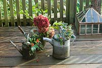 Christmas decorations from your garden - picked branches of evergreens and flower heads ingalvanised watering cans