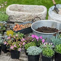 Practical step-by-step guide to planting a stone alpine trough with rock plants. In preparation, stone trough with drainage holes, bag of grit, bowl of John Innes No. 2, gravel, crocks and pots of alpine plants.