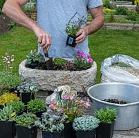 Practical step-by-step guide to planting a stone alpine trough with alpine plants. Once happy with the arrangement, plant by starting in one corner, and working toward the opposite one. Press each plant down firmly in turn, adding extra soil if necessary.