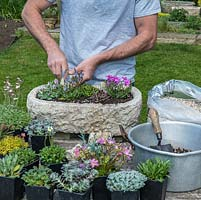 Practical step-by-step guide to planting a stone alpine trough with rock plants. Once the trough is planted, add rocks, ensuring at least half is anchored in the soil.