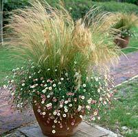 Gap photos specialising in garden and plant photography - Graminees en pot ...