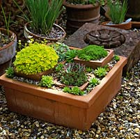 Detail in a pot arrangement of a shallow, rectangular pot filled with succulents and alpines.