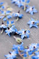Fresh borage flowers taken off their storks ready to be added to an ice tray.