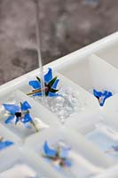 Pouring water into the ice tray that has Borage flower in each segment.