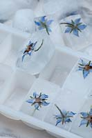 Borage flower ice cubes