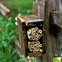 Fixed to a wooden post, a box filled with short lengths of bamboo canes offers shelter to solitary bees.