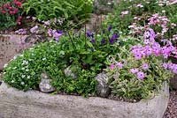 Alpine trough made from tufa, planted with -from front left clockwise: Pratia pedunculata, Thalictrum ichangense Evening Star, Campanula pulla, Hosta Thumb Nail, Phlox x procumbens Variegata and the baby fern, Asplenium trichomanes Cristatum Group.
