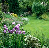 Curving round lawn, summer bed of bearded Iris Dreamcastle, catmint, geum, centaurea, veronica, scabious, poppies and fennel.