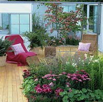 Decked terrace with cane loungers anand tubs of fern. White screens. In courtyard, pink Cornus kousa Satomi and penstemon. Bed of dahlia, lily, alchemilla, achillea.