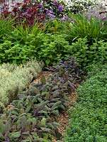 A colouful modern herb garden planted with thyme, sage and oregano.