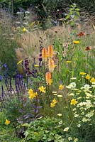 A naturalistic mixed border with Kniphofia, Achillea, Helenium, Sedum, Salvia, wild strawberries and ornamental grasses.