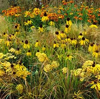 Late summer bed of Stipa tenuissima, Carex comans, Achillea filipendulina, Helenium Rotgold and coneflower. Yellow and orange colour theme