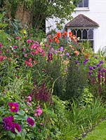 View to house over herbaceous border of phlox, salvia, dahlia, gladioli, echinacea, helenium, lily, alstroemeria, aster, thalictrum.