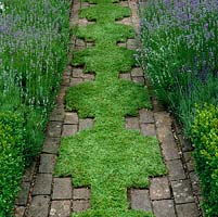 chamomile inset into old brick path edged in lavender. chamomile is kept cut short and the edges snipped sharp with scissors.