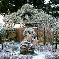 Wire gazebo covered in a climbing rose coated in snow. In the centre, a collection of pots filled with skimmias and grasses.