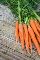 Storing Root Vegetables - A bunch of Carrots on a wooden surface