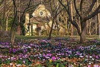 Cyclamen coum and the Sanctuary in the Arboretum, Highgrove Garden, March 2014