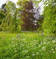 The Wild Flower Meadow, Highgrove Garden, May 2014