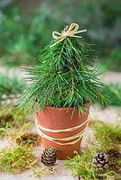 Miniature christmas tree made with foliage of a Pine tree
