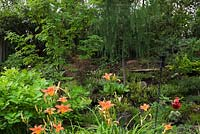 Hemerocallis 'Sammy-Russel' - Daylily flowers in front of a Cotinus - Smoke Tree with Acer griseumin - Maple and Larix decidua 'Hortsmann's' recurva - Larch trees in backyard garden in summer, Quebec, Canada