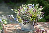 A pretty arrangement of flowering herbs including Oregano, borage, savory, fennel and red basil.