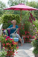 Woman relaxing in garden pouring a glass of water. Plants include Pelargonium, Zinnia, Gladiolus and Lavatera trimestris