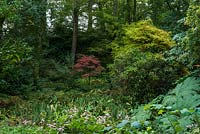 A shady woodland garden, established on site of former Roman clay pit planted 50 years ago, with a small bright Acer at its centre.