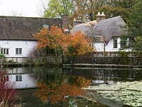 Reflected in lake, yellow and orange foliage of Cotinus coggygria Flame, smoke bush. Old millhouse and thatched cottage behind.