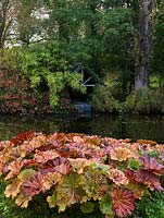 A concealed boathouse edged in bamboo, seen from beneath a red-leaved Liquidambar styraciflua on the opposite side of the lake. On bank, red Darmera peltata leaves,