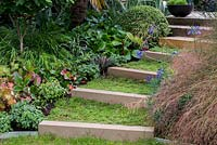 Chamomile covered steps link terraces in a split level garden. Planting alongside includes left Epimedium Lilafee, Bergenia Rotblum, Hackonechloa macra and Buxus sempervirens, Right Stipa tenuissima and Agapanthus 'Midnight Star'.